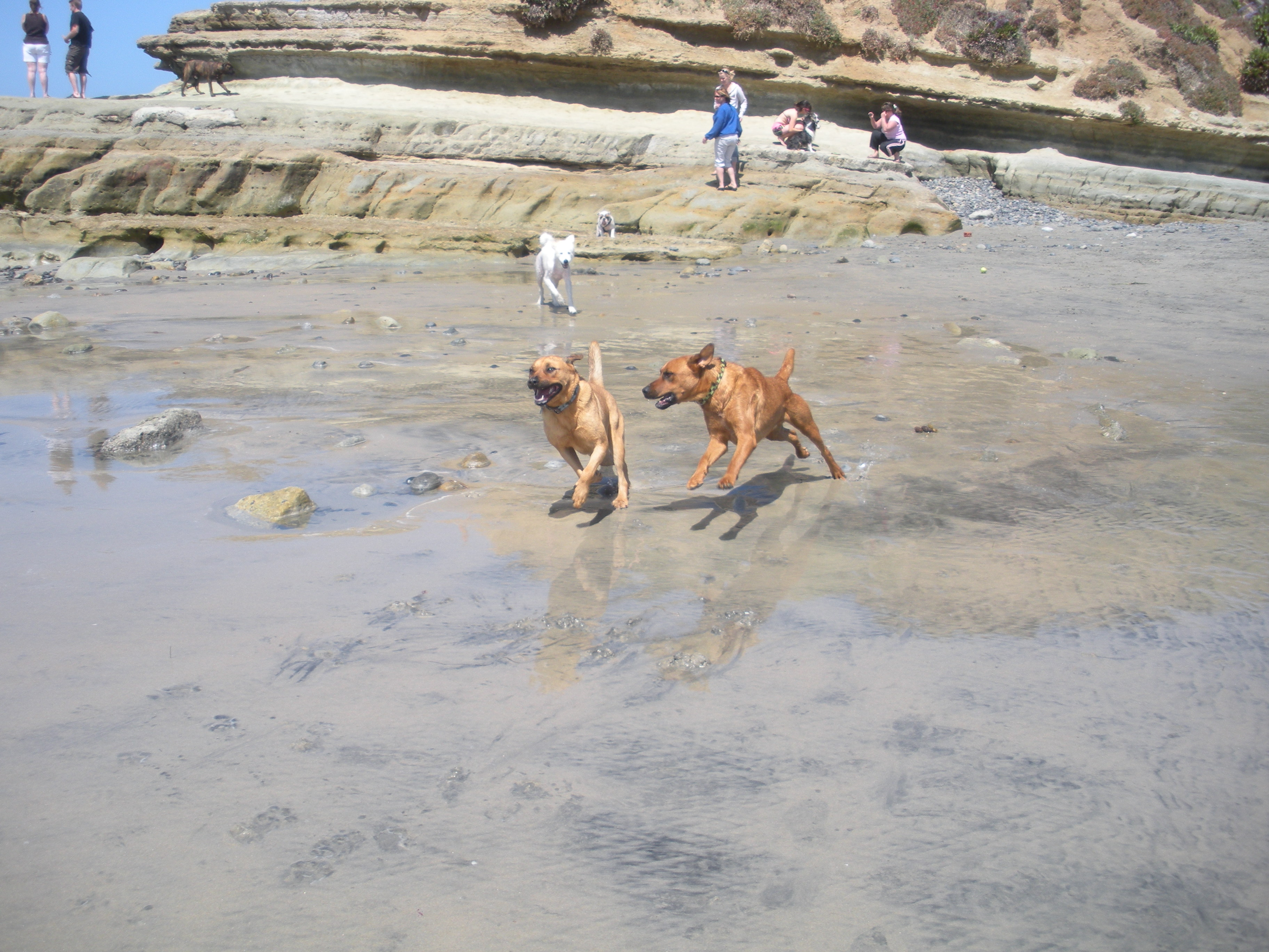 Dog Park Amp Beach In North County Military Town Advisor