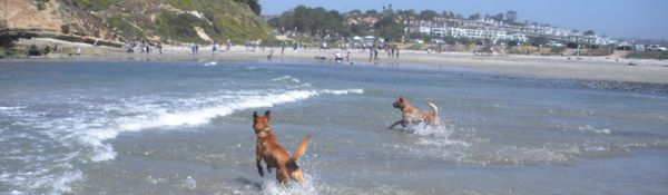 dog-friendly-del-mar-beach-san-diego
